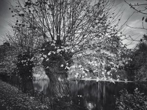 Ghost in the willow