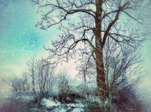 Moon over frozen Landscape