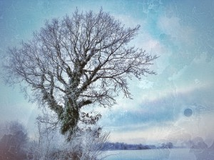 The Frosty Tree