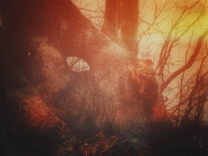 Through the eye of the tree